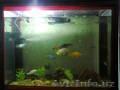 Аквариум 300 литров с рыбами и черепашкой